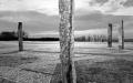 strom-zivota1